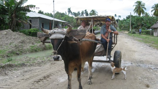 Ox and buggy in Cuba